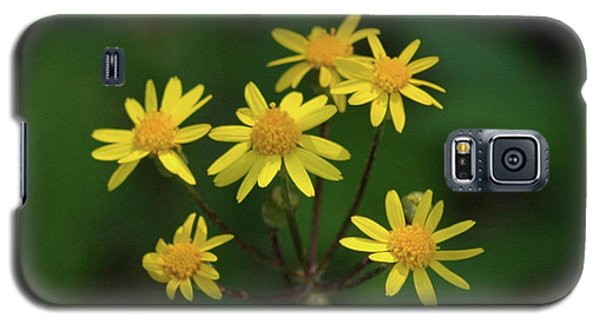 Galaxy S5 Case featuring the photograph Wild Meadow Daisies by LeeAnn McLaneGoetz McLaneGoetzStudioLLCcom