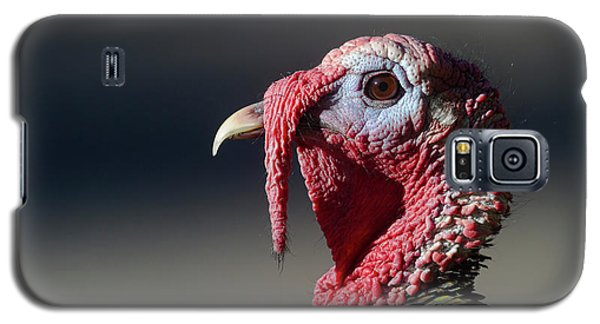 Wild Merriams Turkey Portrait  Galaxy S5 Case