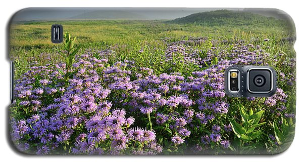 Wild Mints Galore In Glacial Park Galaxy S5 Case