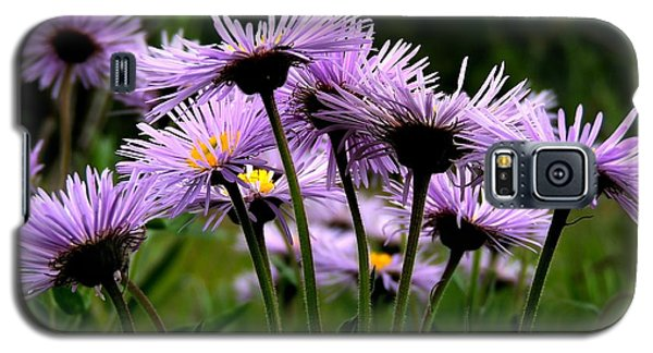 Wild Mountain Asters Galaxy S5 Case