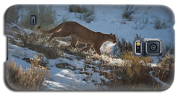 Wild Mountain Lion Running At First Light Galaxy S5 Case