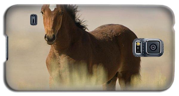 Wild Mustang Colt Galaxy S5 Case