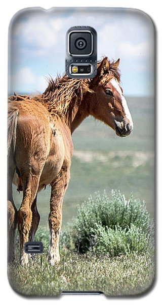 Wild Mustang Colt Of Sand Wash Basin Galaxy S5 Case