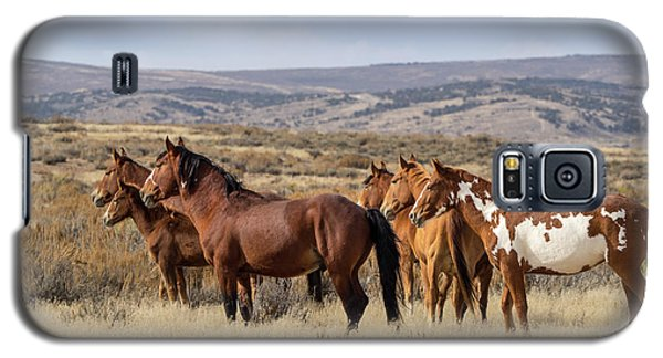 Wild Mustang Family Band In Sand Wash Basin Galaxy S5 Case