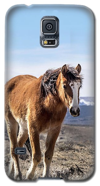 Wild Mustang Filly Of Sand Wash Basin Galaxy S5 Case