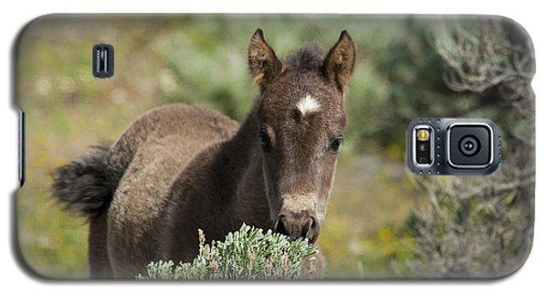 Wild Mustang Foal Galaxy S5 Case