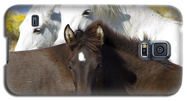 Wild Mustang Herd Galaxy S5 Case