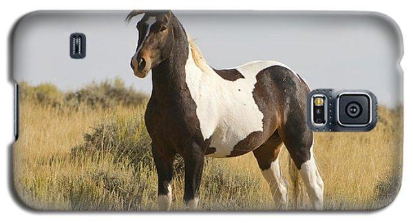 Wild Mustang Horse Galaxy S5 Case