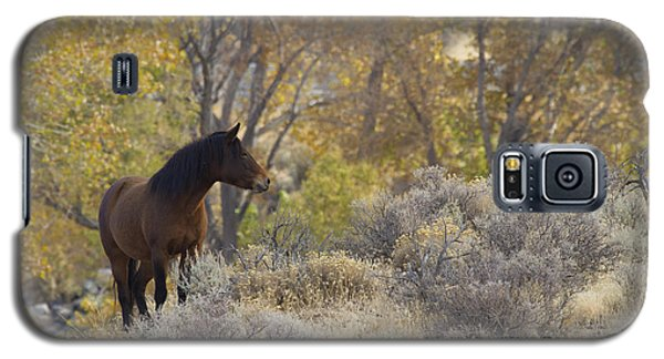 Wild Mustang Horse Galaxy S5 Case