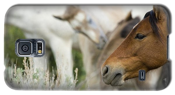 Wild Mustang Horses Galaxy S5 Case