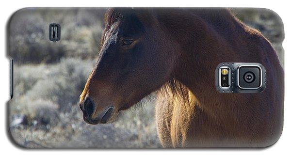 Wild Mustang Mare Galaxy S5 Case