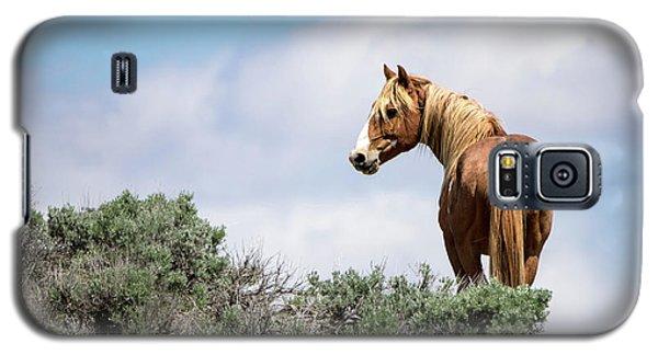 Wild Mustang Stallion Of Sand Wash Basin Galaxy S5 Case