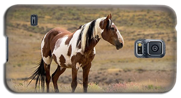 Wild Mustang Stallion Picasso Of Sand Wash Basin Galaxy S5 Case