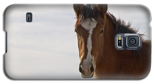 Wild Mustang Yearling Galaxy S5 Case