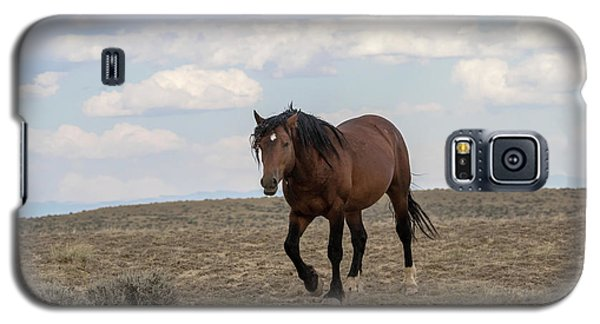 Wild Stallion Galaxy S5 Case