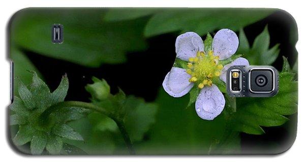 Wild Strawberry Blossom And Raindriops Galaxy S5 Case