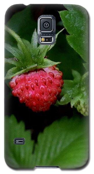 Wild Strawberry Galaxy S5 Case