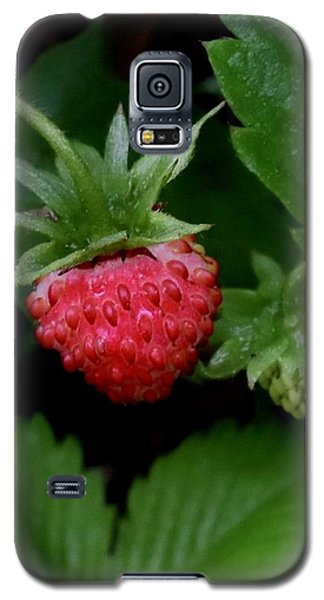 Wild Strawberry Galaxy S5 Case