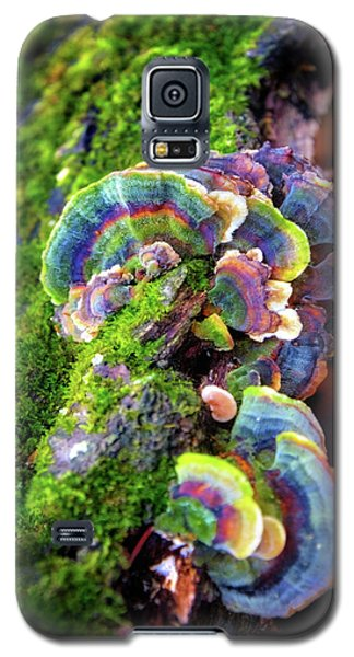 Galaxy S5 Case featuring the photograph Wild Striped Mushroom Growing On Tree - Paradise Springs - Kettle Moraine State Forest by Jennifer Rondinelli Reilly - Fine Art Photography