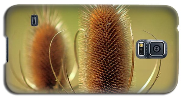 Galaxy S5 Case featuring the photograph Wild Teasel by Bruce Patrick Smith