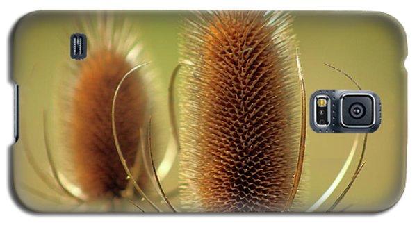 Wild Teasel Galaxy S5 Case