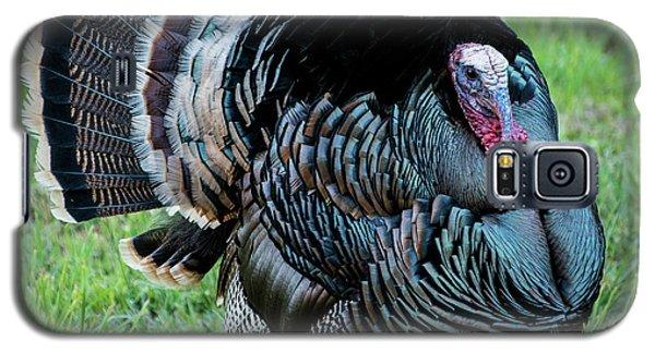 Wild Turkey - Capitol Reef National Park - Utah Galaxy S5 Case by Gary Whitton