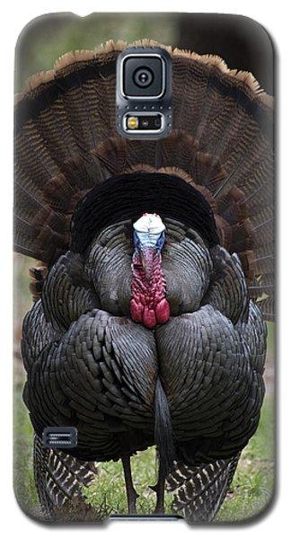 Wild Turkey In All Its Glory Galaxy S5 Case