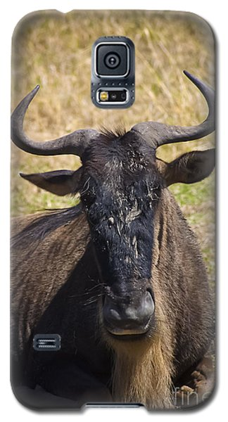 Wildebeest Taking A Break Galaxy S5 Case by Darcy Michaelchuk