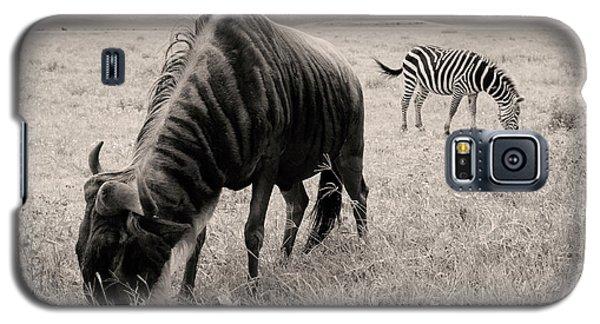 Wildebeest And Zebra Galaxy S5 Case