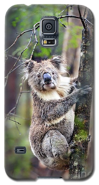 Koala Galaxy S5 Case - Wildest Dreams by Evelina Kremsdorf