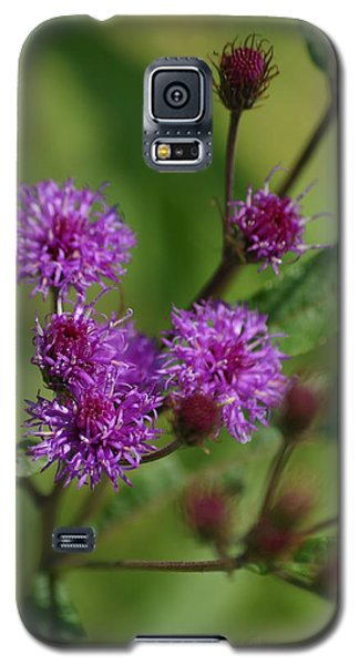 Wildflower Galaxy S5 Case