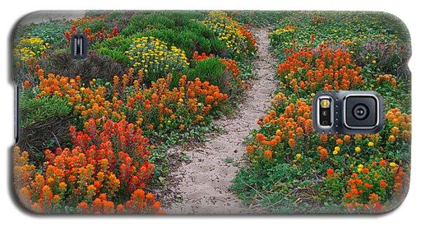 Wildflower Path At Ribera Beach Galaxy S5 Case