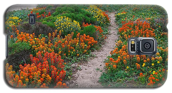 Wildflower Path At Ribera Beach Galaxy S5 Case