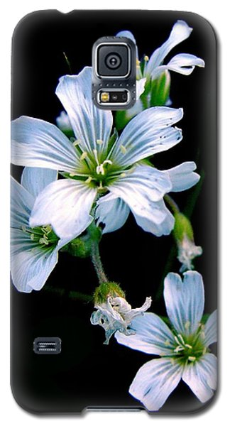 Wildflower Galaxy S5 Case by Robert Knight