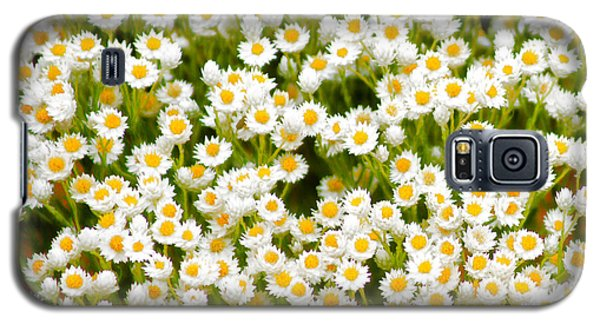 Galaxy S5 Case featuring the photograph Wildflowers by Holly Kempe