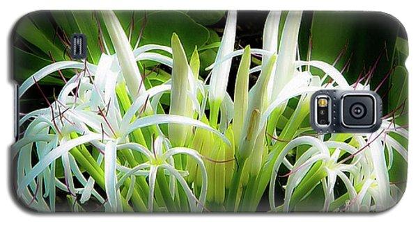 Wildflowers Of Hawaii Galaxy S5 Case