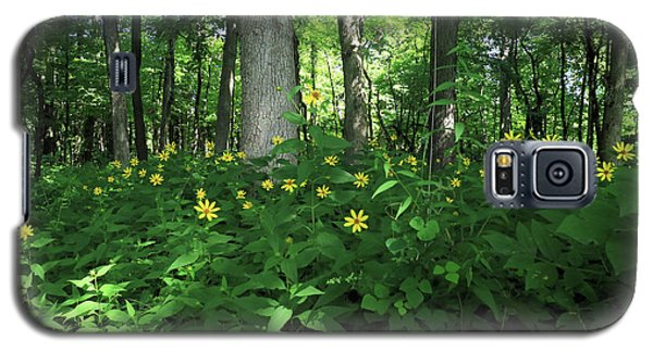 Wildflowers On The Edge Of The Forest Galaxy S5 Case by Scott Kingery