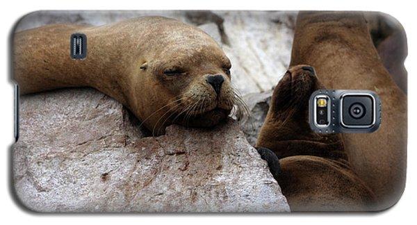 Galaxy S5 Case featuring the photograph Wildlife Of The Ballestas Islands by Aidan Moran