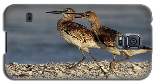 Willet Fight Galaxy S5 Case