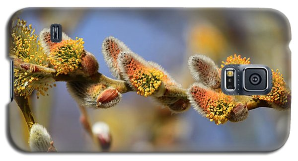 Willow Buds Galaxy S5 Case by Donna Kennedy