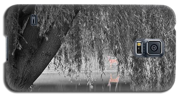 Galaxy S5 Case featuring the photograph Willow Deer II by Dylan Punke