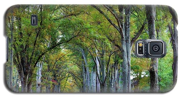 Willow Oak Trees Galaxy S5 Case