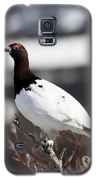 Willow Ptarmigan Galaxy S5 Case