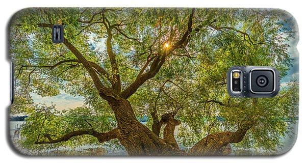 Willow Tree - Lake Geneva Wisconsin Galaxy S5 Case