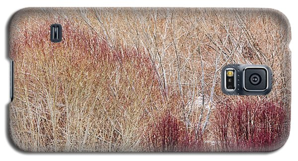 Willows In Winter Galaxy S5 Case