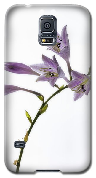 Galaxy S5 Case featuring the photograph Willowy Whispers by Mike Lang