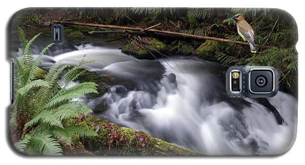 Galaxy S5 Case featuring the photograph Wilson Creek #18 With Added Cedar Waxwing by Ben Upham III