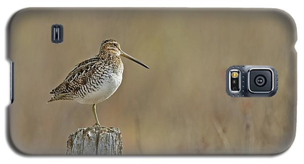 Wilson's Snipe On A Post Galaxy S5 Case by CR Courson