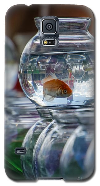Win A Goldfish Galaxy S5 Case