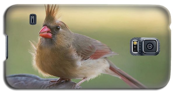Galaxy S5 Case featuring the photograph Wind Blown Cardinal  by Terry DeLuco